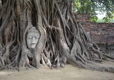 Buddha in Roots