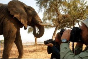 Photographers with Elephant