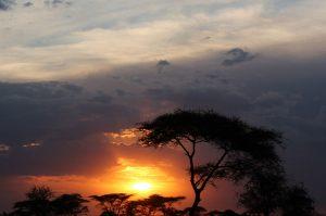 sunset_joel_herzog