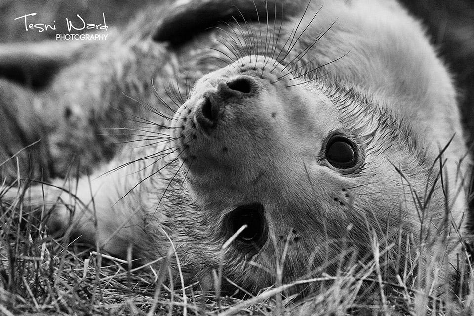 Seal - Cuteness