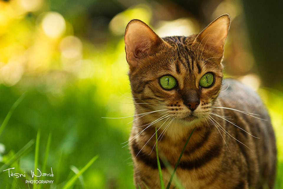 Kitten with green eyes