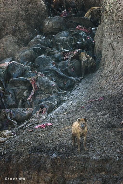 The aftermath, Simon Stafford, Winner, Mammals