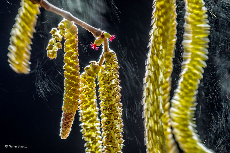 Wind composition By Valter Binotto Winner, Plants and Fungi