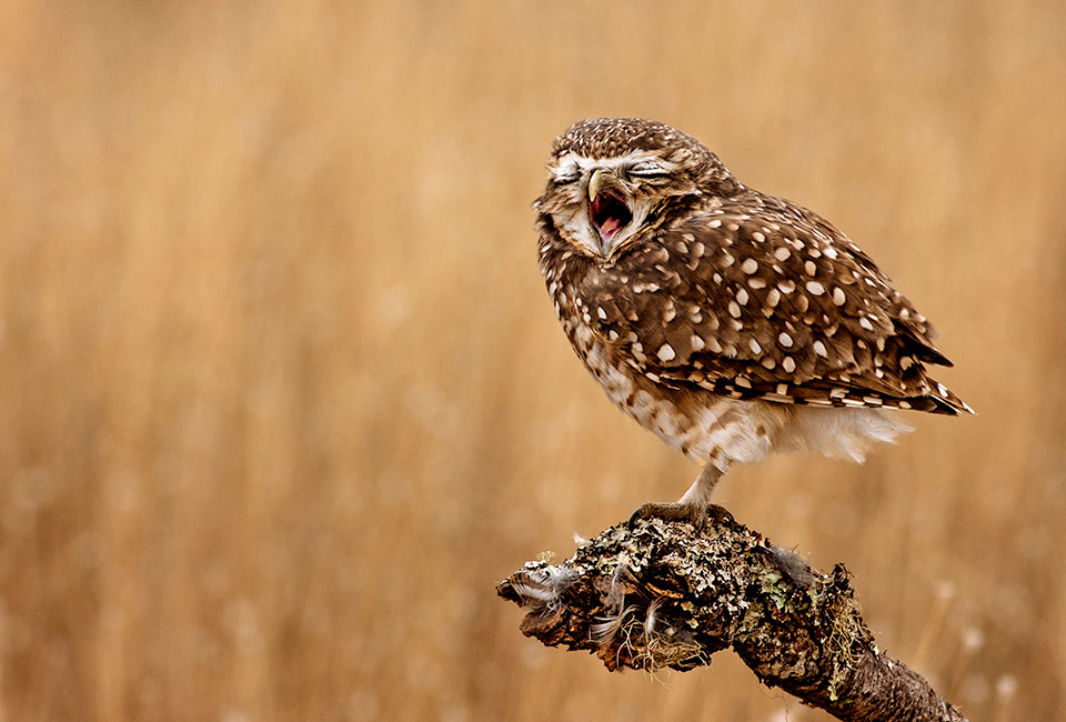 Mario Gustavo Fiorucci won the portfolio award for four posing owls