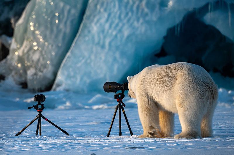 Polar bear looking through lens - by Roie Galitz