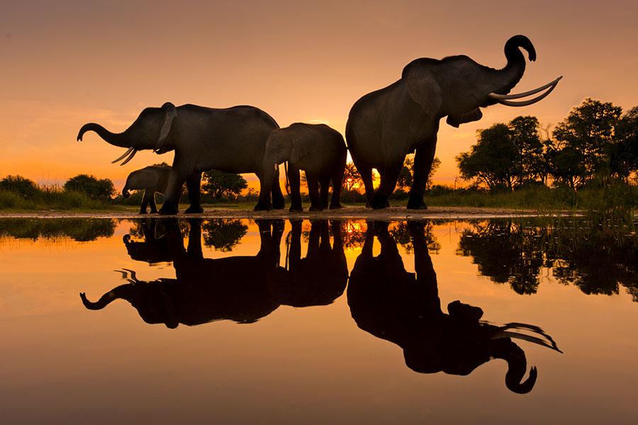 Remembering Wildlife
