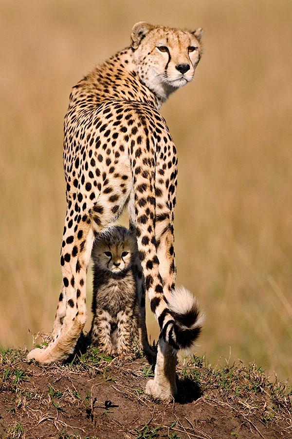 Leopard, Piper Mackay